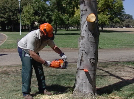 video guide to chainsaw safety