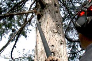pole saw safety